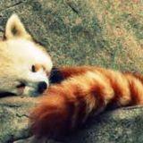 PandaMoglus's picture